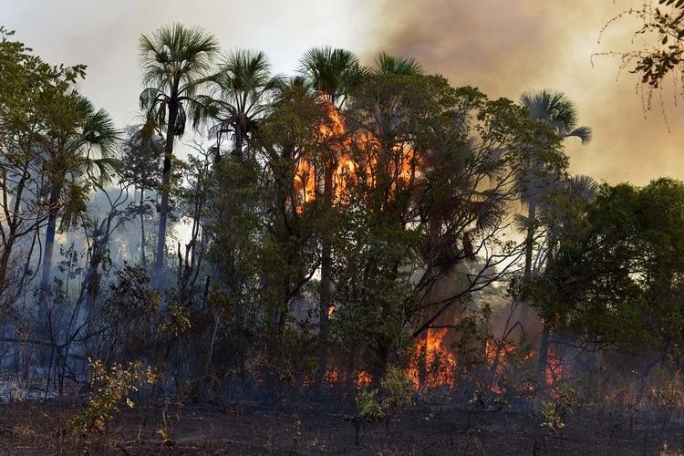Brasil, Australia y Japón, los países que menos ayudaron a combatir el calentamiento global